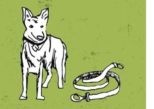 Der Schäferhund