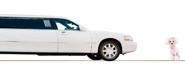 eine Limousine und ein Pudel
