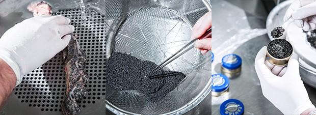 Kaviar Produktion