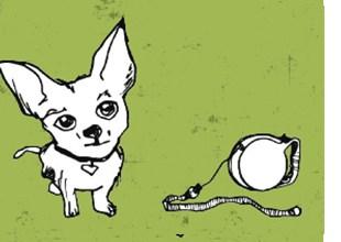 Der Chihuahua