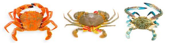 eine Auswahl an verschiedenen Krabbensorten