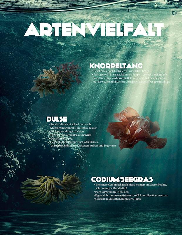 Artenvielfalt der Alge