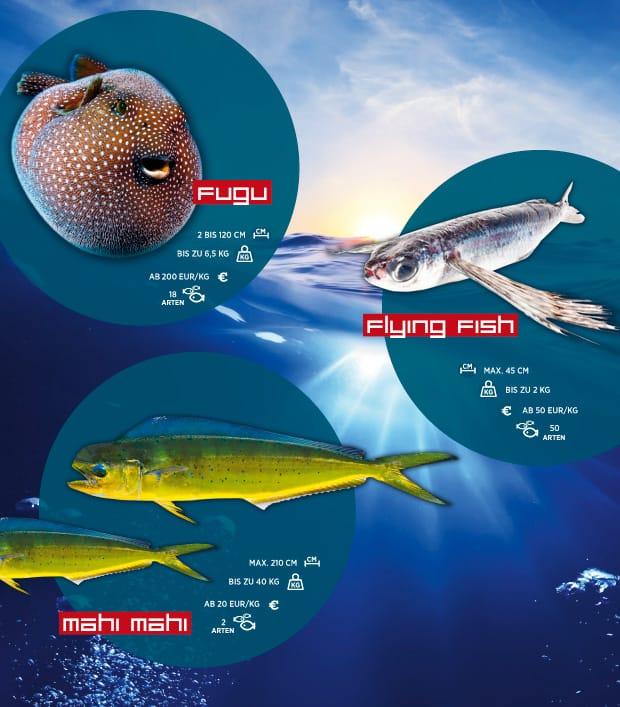 Fischsorten und ihre Verbreitung