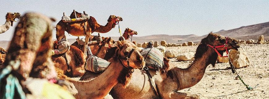 Ein Paradies mitten in der Wüste: In Dubai klettern die Temperaturen im Sommer bis über die 40-Grad-Grenze
