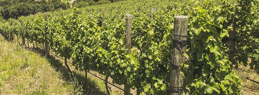Bester Boden und perfektes Klima: Kapstadt und Umgebung sind ideal für den Weinanbau.