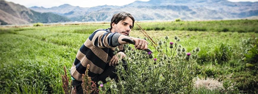 Virgilio Martínez am Feld: Mit dem Messer und offenem Auge ist der Koch, der an der Spitze der lateinamerikanischen 50-Best-Restaurants-Liste steht, in seiner Heimat unterwegs.